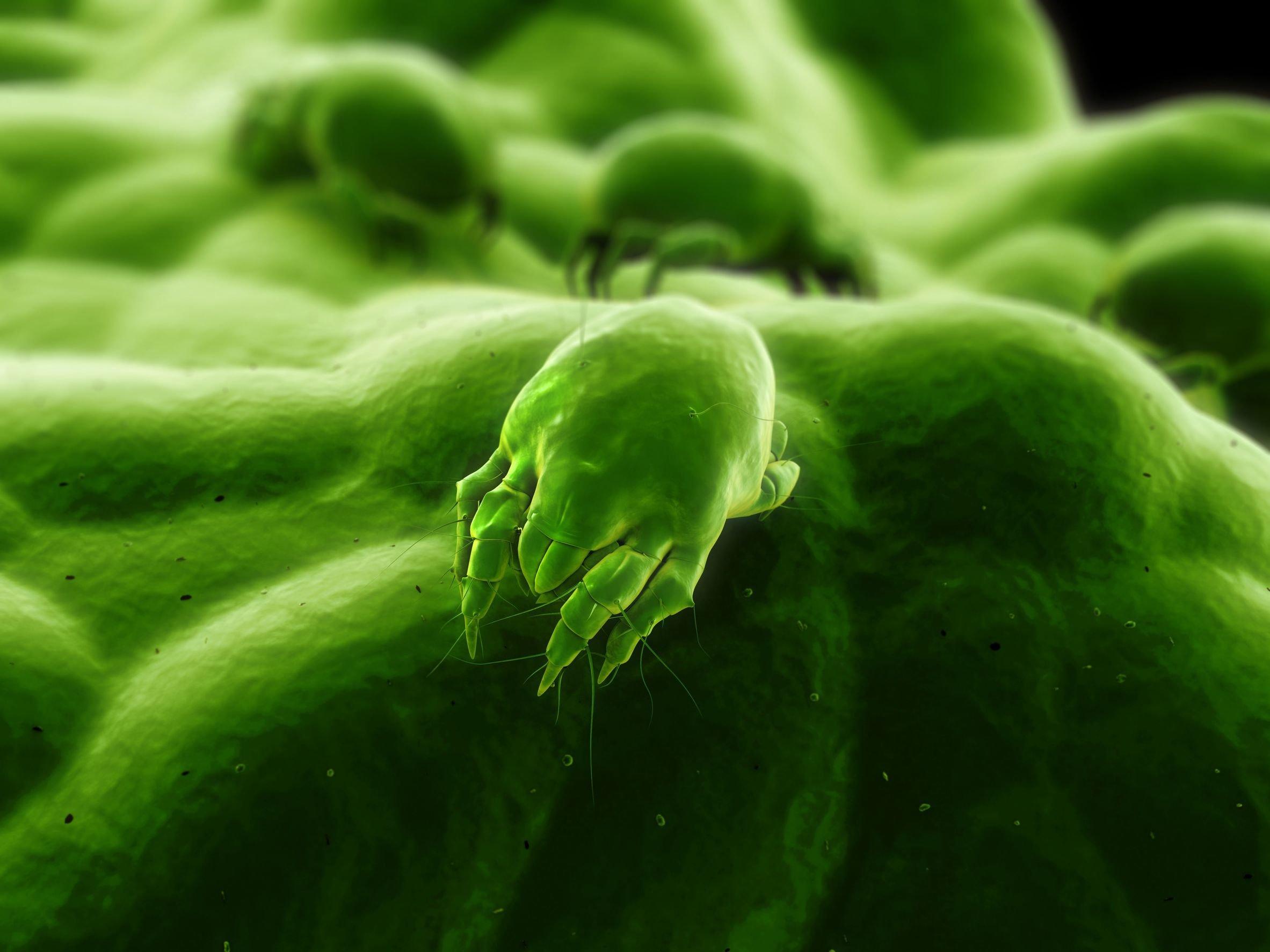 La humedad de las zonas de costa favorece el desarrollo de alergia a ...